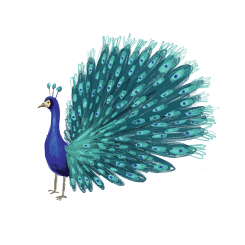 [Tattly] Blue Peacock Pairs