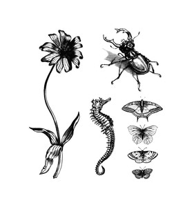 [Tattly] Natural Curiosities Set