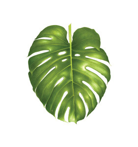 [Tattly] Philodendron Monstera Pairs