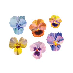 [Tattly] Pansies